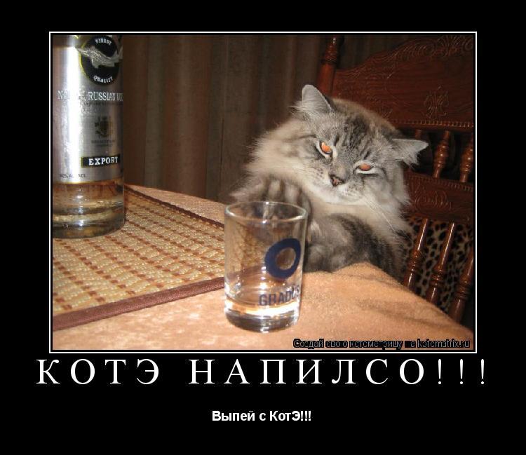 Котоматрица: Котэ напилсо!!! Выпей с КотЭ!!!