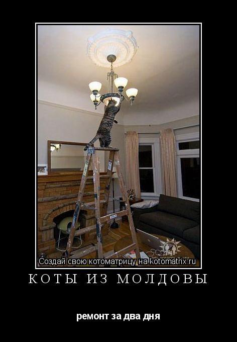 Котоматрица: коты из Молдовы ремонт за два дня