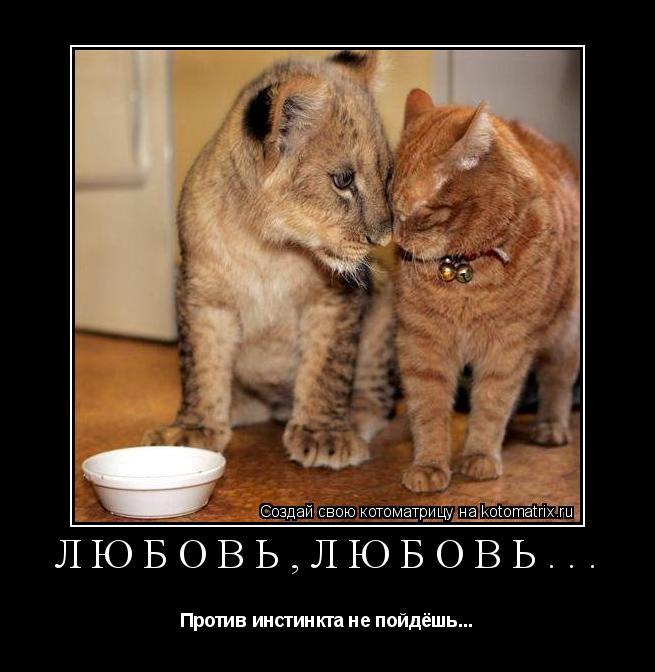 Котоматрица: Любовь,любовь... Против инстинкта не пойдёшь...