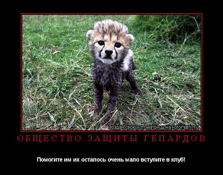 Котоматрица: Общество защиты гепардов Помогите им их осталось очень мало вступите в клуб!