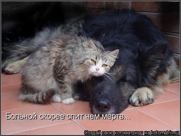 Котоматрица: Больной скорее спит чем мертв...