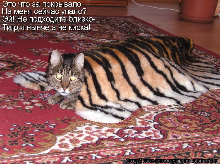 Котоматрица: Это что за покрывало На меня сейчас упало? Эй! Не подходите близко- Тигр я нынче,а не киска!