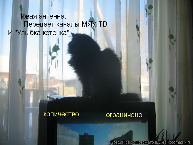 """Котоматрица: Новая антенна. Передаёт каналы МЯУ ТВ  И """"Улыбка котёнка"""" количество ограничено"""