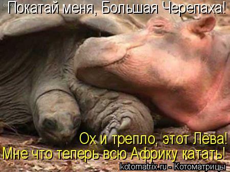 Котоматрица: Покатай меня, Большая Черепаха! Ох и трепло, этот Лёва! Мне что теперь всю Африку катать!