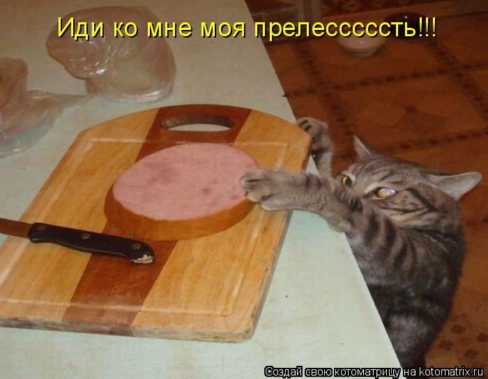 Котоматрица: Иди ко мне моя прелесссссть!!!