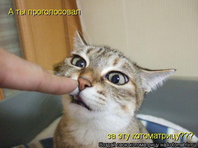 Котоматрица: А ты проголосовал за эту котоматрицу???