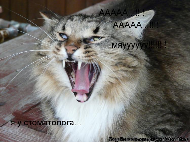 Котоматрица: я у стоматолога... ААААА...!!!!  ААААА...!!!!  мяуууууу!!!!!!!!