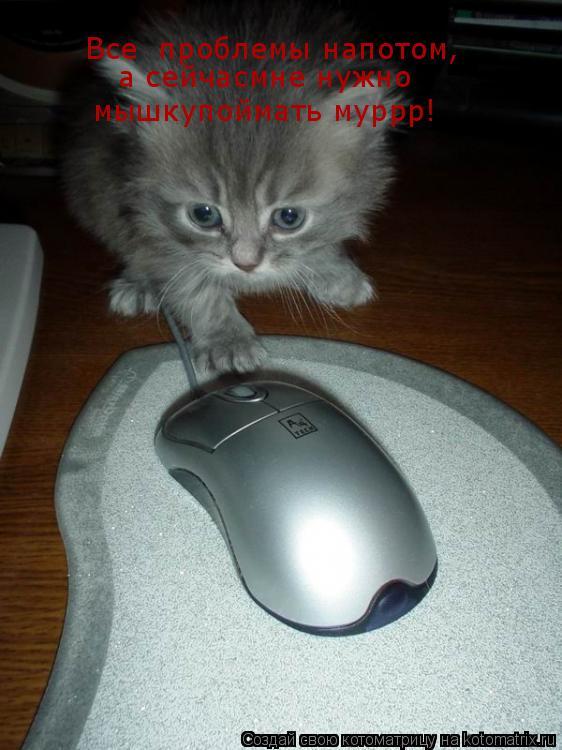 Котоматрица: Все  проблемы напотом,   а сейчасмне нужно мышкупоймать муррр!