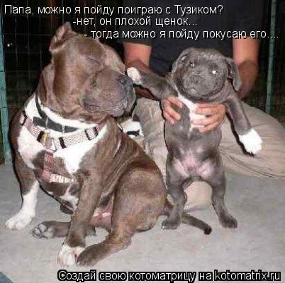 Котоматрица: Папа, можно я пойду поиграю с Тузиком? -нет, он плохой щенок... - тогда можно я пойду покусаю его....