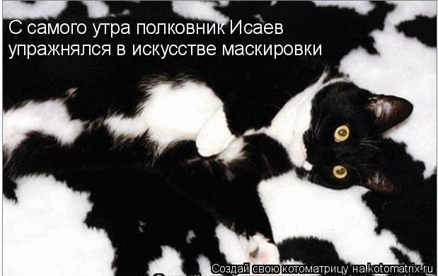 Котоматрица: С самого утра полковник Исаев упражнялся в искусстве маскировки