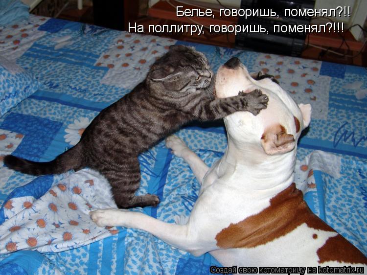 Котоматрица: Белье, говоришь, поменял?!! На поллитру, говоришь, поменял?!!!