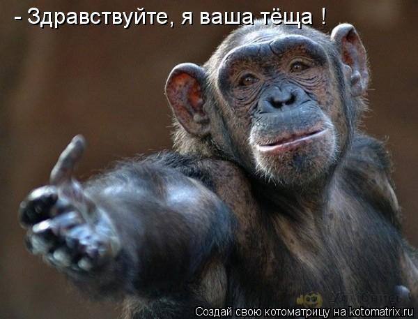 Котоматрица: - Здравствуйте, я ваша тёща !