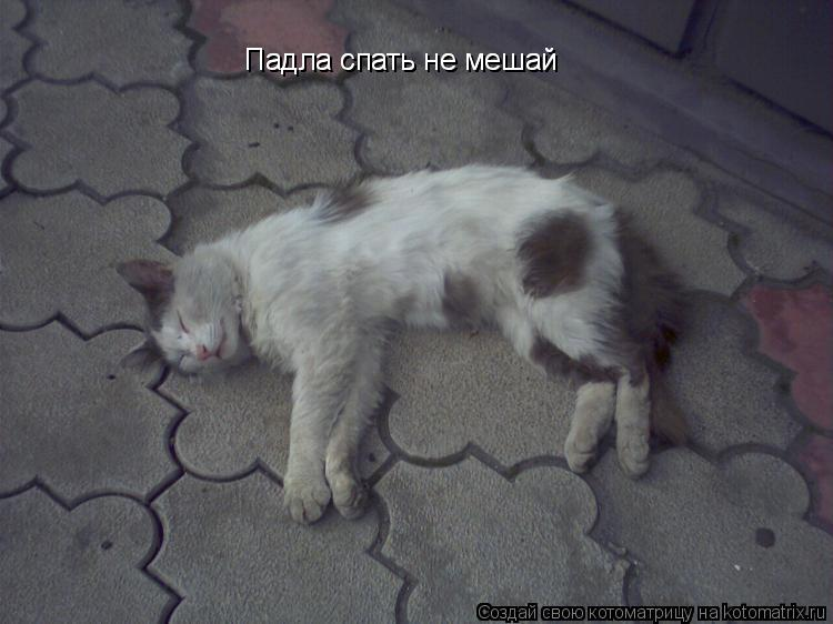 Котоматрица: Падла спать не мешай Падла спать не мешай
