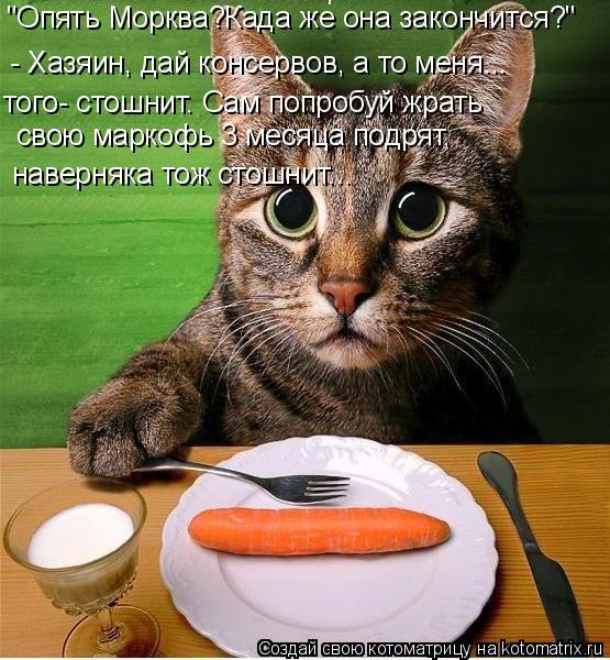 """Котоматрица: """"Опять Морква?Када же она закончится?"""" - Хазяин, дай консервов, а то меня... того- стошнит. Сам попробуй жрать  свою маркофь 3 месяца подрят,  нав"""