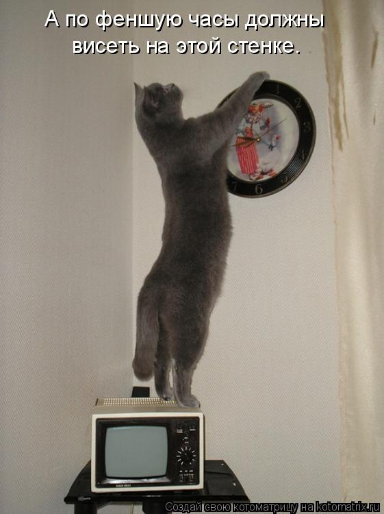 Котоматрица: А по феншую часы должны висеть на этой стенке.