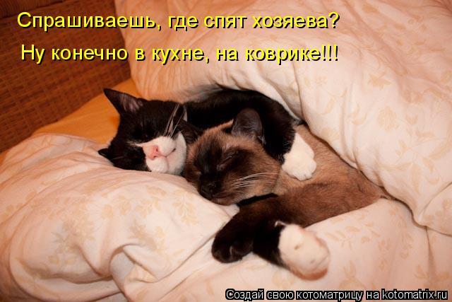 Котоматрица: Спрашиваешь, где спят хозяева? Ну конечно в кухне, на коврике!!!