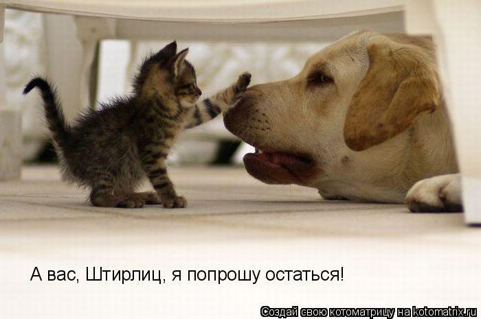 Котоматрица: А вас, Штирлиц, я попрошу остаться!