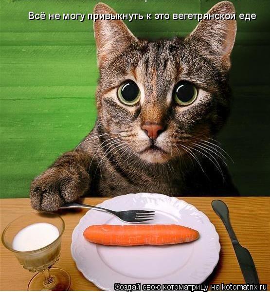 Котоматрица: Всё не могу привыкнуть к это вегетрянской еде