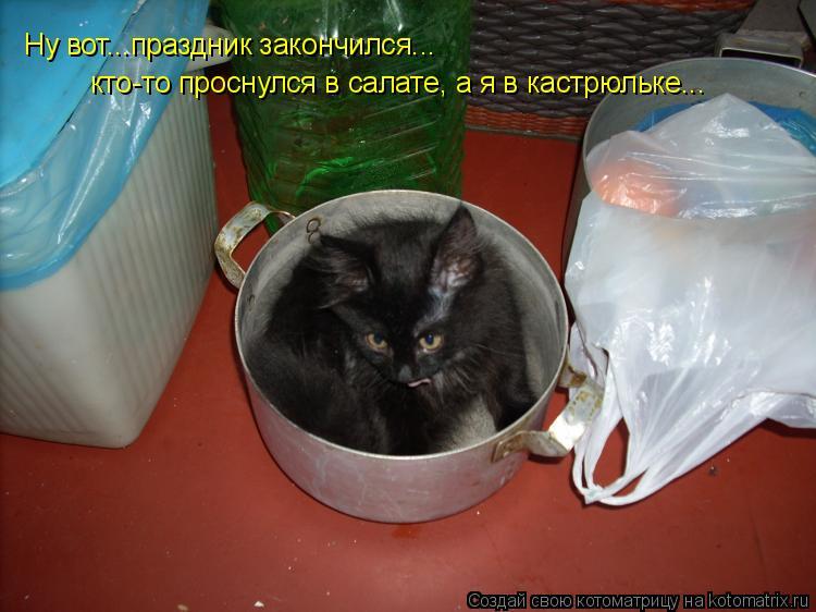 Котоматрица: кто-то проснулся в салате, а я в кастрюльке... Ну вот...праздник закончился... Ну вот...праздник закончился... Ну вот...праздник закончился... Ну во