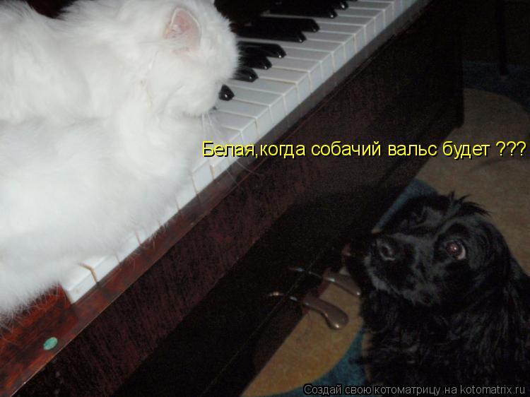 Котоматрица: Белая,когда собачий вальс будет ???