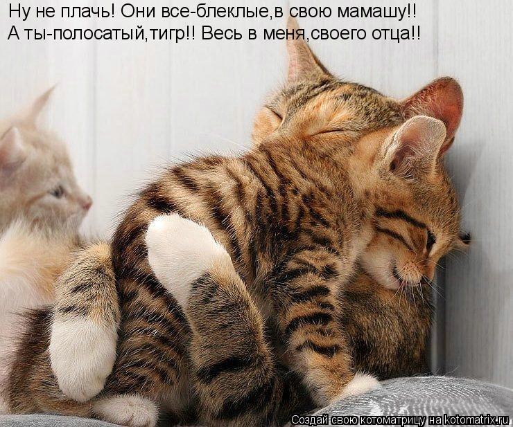 Котоматрица: Ну не плачь! Они все-блеклые,в свою мамашу!! А ты-полосатый,тигр!! Весь в меня,своего отца!!