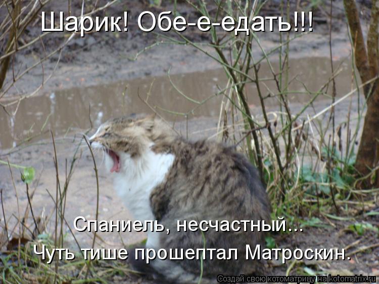 Котоматрица: Шарик! Обе-е-едать!!! Спаниель, несчастный... Чуть тише прошептал Матроскин.