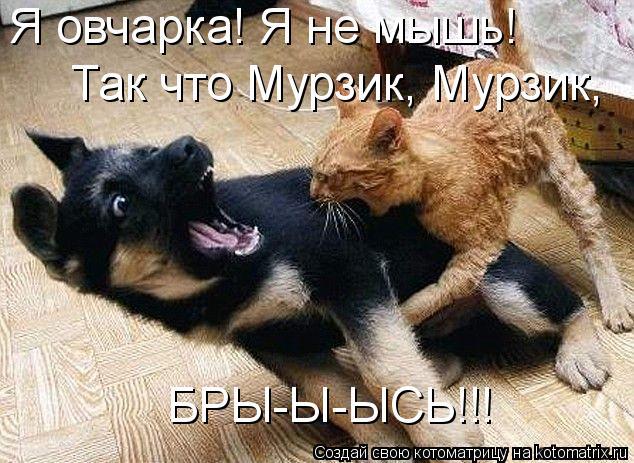 Котоматрица: Я овчарка! Я не мышь! Так что Мурзик, Мурзик,  БРЫ-Ы-ЫСЬ!!!