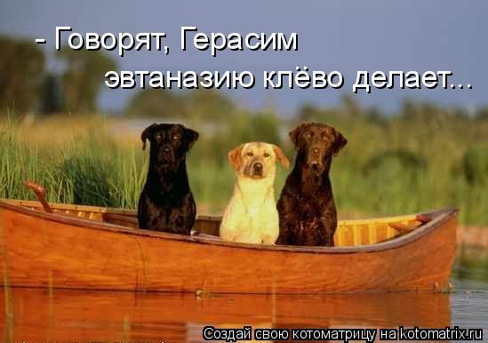 Котоматрица: - Говорят, Герасим  эвтаназию клево делает... ..