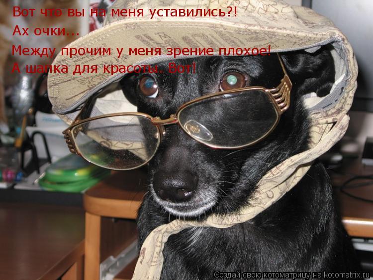 Котоматрица: Вот что вы на меня уставились?! Ах очки... Между прочим у меня зрение плохое! А шапка для красоты. Вот!