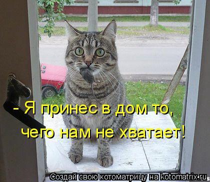 Котоматрица: - Я принес в дом то,  чего нам не хватает!