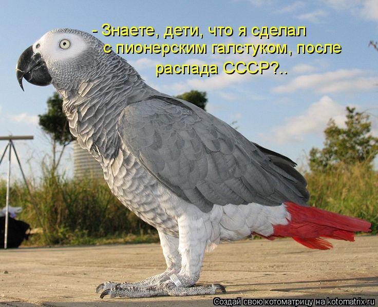 Котоматрица: - Знаете, дети, что я сделал  с пионерским галстуком, после распада СССР?..