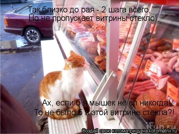 Котоматрица: Так близко до рая - 2 шага всего, Но не пропускает витрины стекло! Ах, если б я мышек не ел никогда! То не было б в этой витрине стекла?!