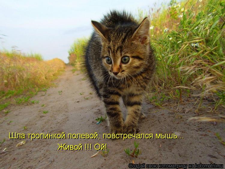 Котоматрица: Живой !!! Ой! Шла тропинкой полевой, повстречался мышь...