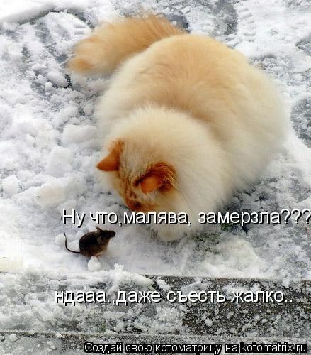 Котоматрица: Ну что,малява, замерзла??? ндааа.,даже съесть жалко..