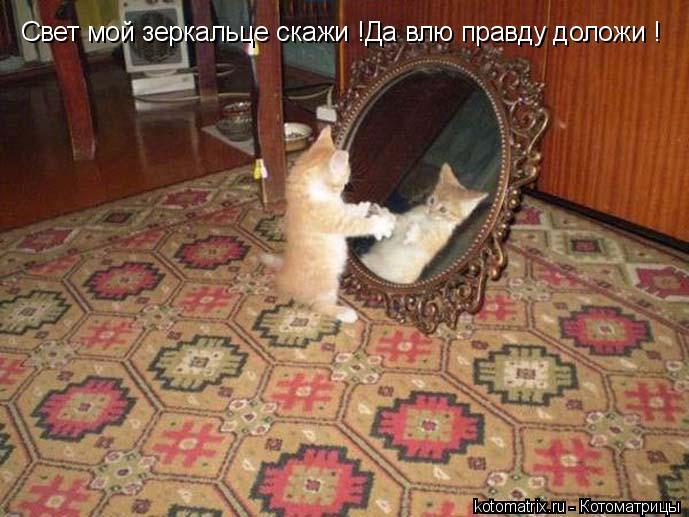 Котоматрица: Свет мой зеркальце скажи !Да влю правду доложи !