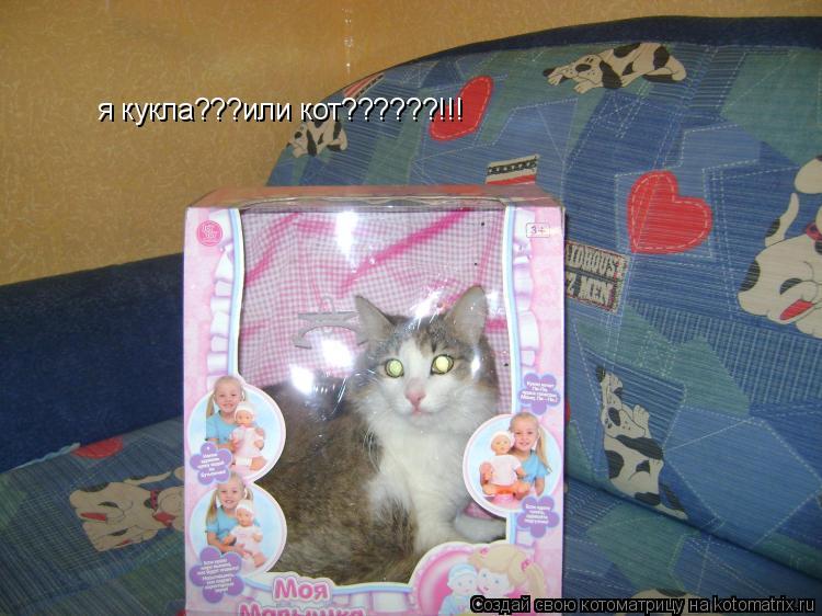Котоматрица: я кукла???или кот??????!!!