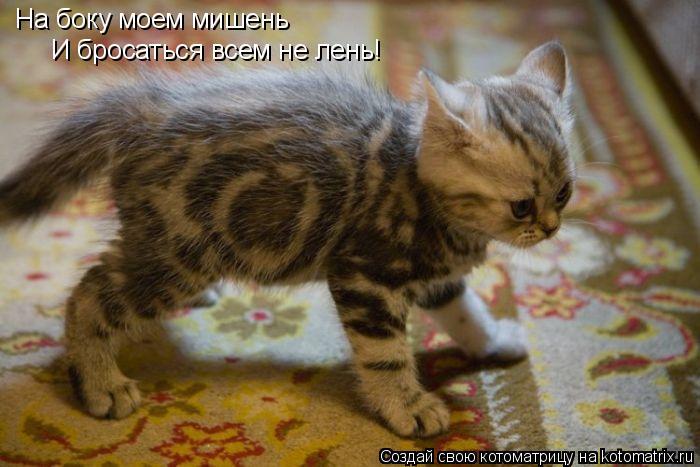 Котоматрица: На боку моем мишень И бросаться всем не лень!