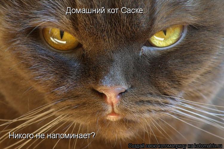 Котоматрица: Домашний кот Саске. Никого не напоминает?