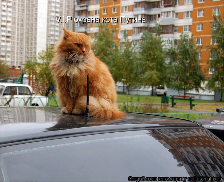 Котоматрица: V.I.P охрана кота Путина