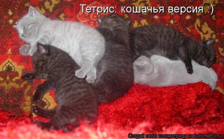 Котоматрица: Тетрис: кошачья версия :)