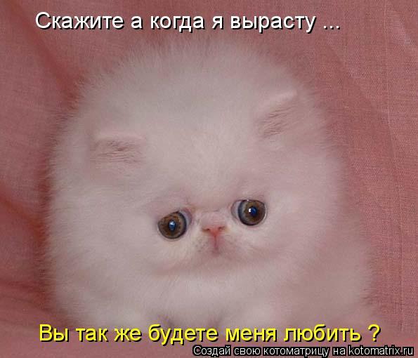 Котоматрица: Скажите а когда я вырасту ... Вы так же будете меня любить ?