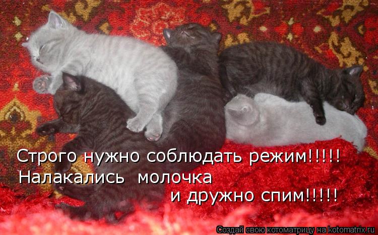 Котоматрица: Строго нужно соблюдать режим!!!!! Налакались  молочка и дружно спим!!!!!