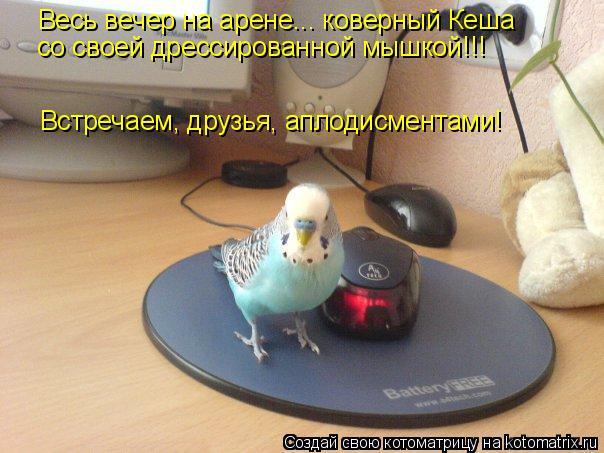 Котоматрица: Весь вечер на арене... коверный Кеша со своей дрессированной мышкой!!!  Встречаем, друзья, аплодисментами!