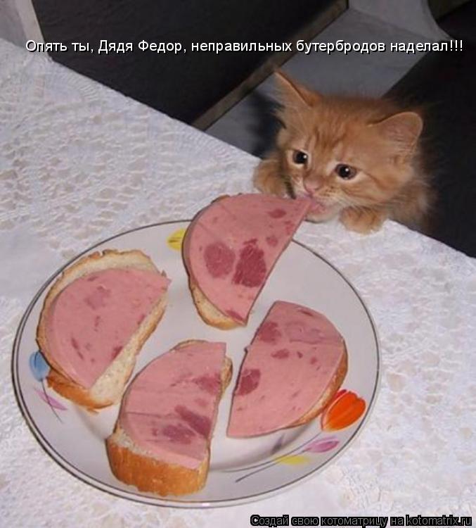 Котоматрица: Опять ты, Дядя Федор, неправильных бутербродов наделал!!!