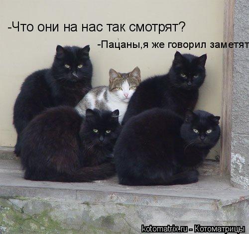 Котоматрица: -Что они на нас так смотрят? -Пацаны,я же говорил заметят.