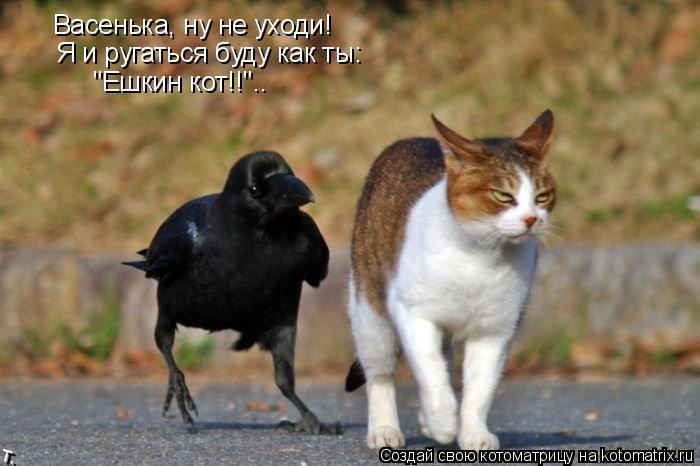 """Котоматрица: Васенька, ну не уходи! Я и ругаться буду как ты: """"Ешкин кот!!"""".."""