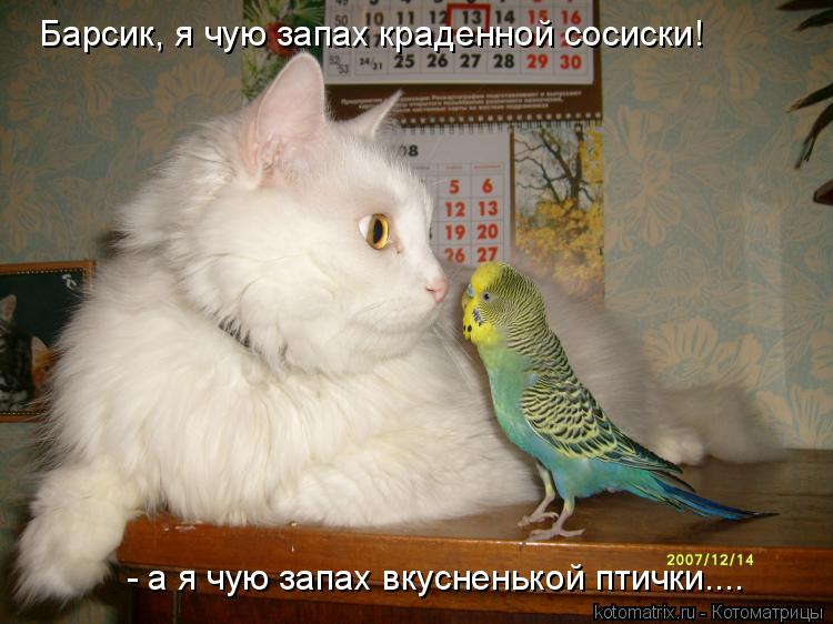 Котоматрица: Барсик, я чую запах краденной сосиски! - а я чую запах вкусненькой птички....