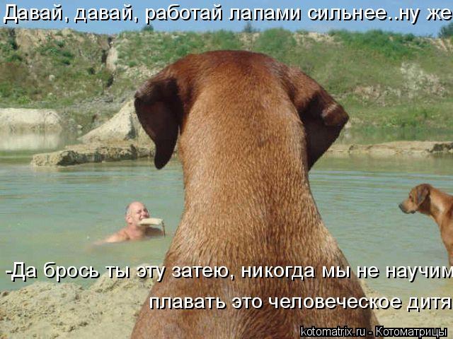 Котоматрица: Давай, давай, работай лапами сильнее..ну же! -Да брось ты эту затею, никогда мы не научим  плавать это человеческое дитя