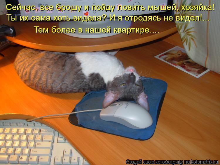 может ли кот ловить мышей