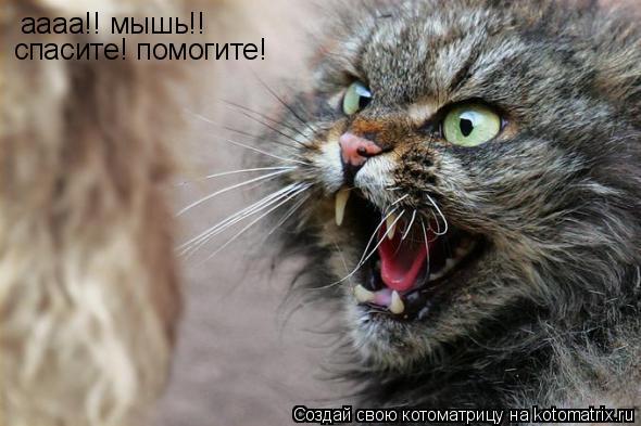 Котоматрица: аааа!! мышь!!  спасите! помогите!